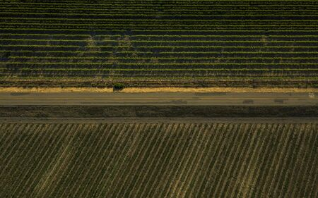 Areal view of highway through rows of lush vineyards on a hillside, Napa Valley, California, United States of America, North America Banque d'images