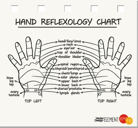masseuse: Hand reflexology chart . Vector illustration