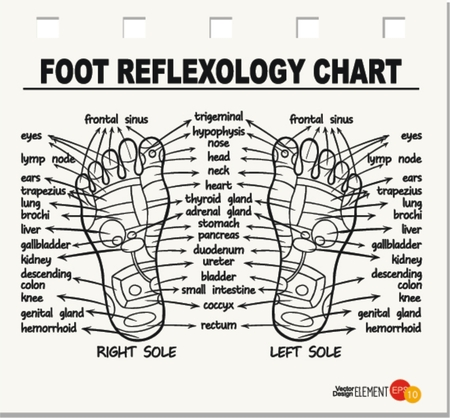 Foot reflexology chart . Vector illustration