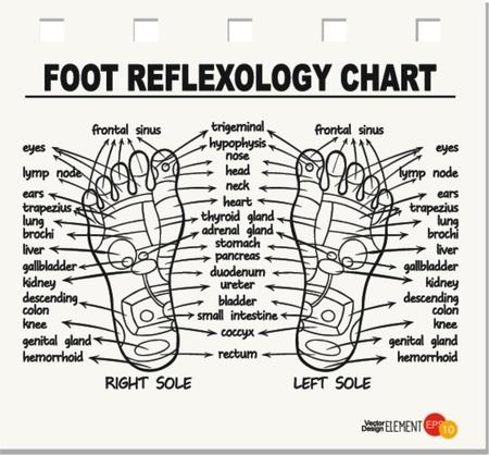 Foot reflexology chart . Vector illustration