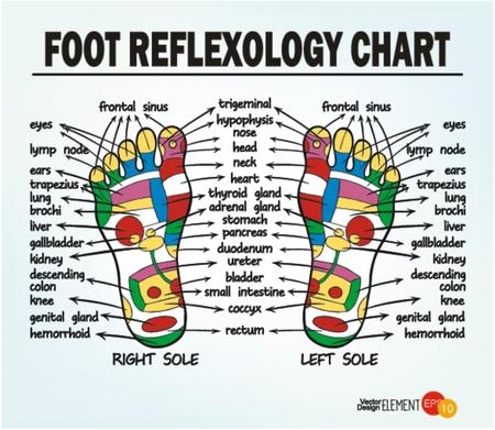 Foot reflexology chart . Vector illustration Vector Illustration