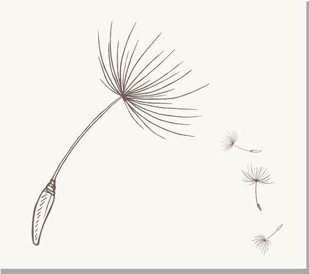 Vector Dandelions icon, vector illustration