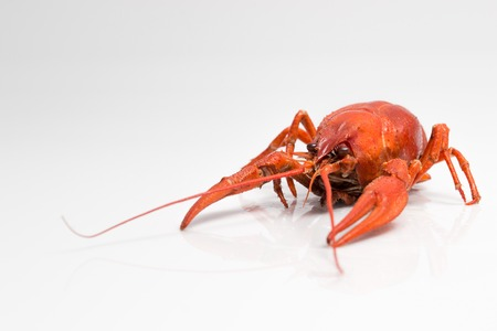 red cooked: Red cooked crayfish on a white background Stock Photo