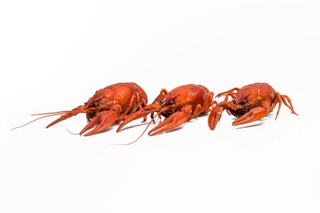 cancers: Red cooked crayfish on a white background Stock Photo