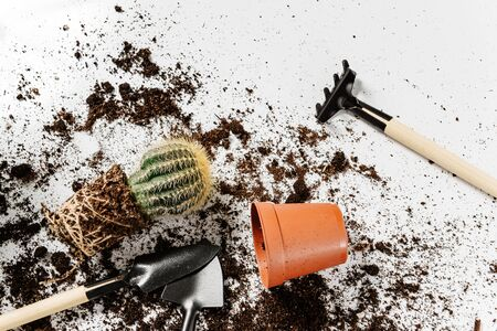 Transplanting a cactus into a new flower pot. Flat lay home gardening concept with cactus, flower pot, plant care tools and land scattered on a white surface.