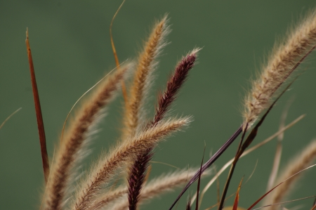 cattails in the wind Imagens