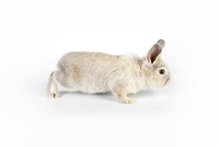 Small and sweet Easter rabbit Zdjęcie Seryjne