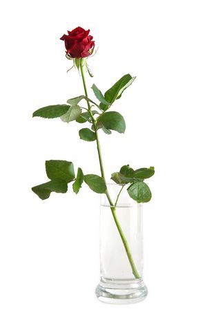 Beautiful red rose on a white background Stock Photo - 732616