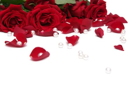 Beautiful red roses on a white background photo