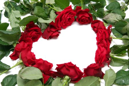 Beautiful red roses on a white background Stock Photo - 733656