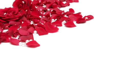 Beautiful red roses on a white background Stock Photo - 733648