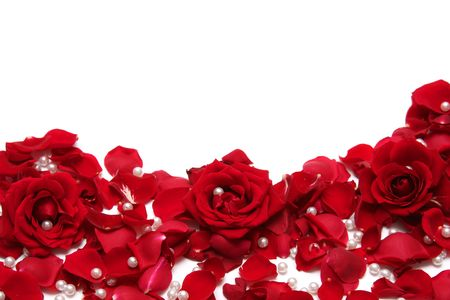 Hermosas rosas rojas sobre fondo blanco  Foto de archivo - 733646