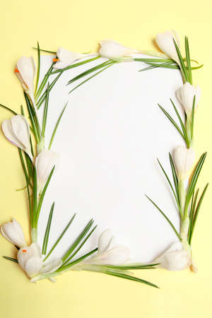 White copy space and yellow frame with white crocus photo