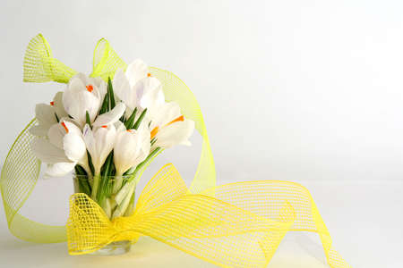 Beautiful white crocus on a white background photo