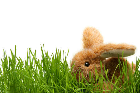 Easter bunny in grass on the white background Stock Photo - 776734