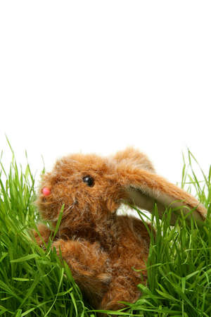 Easter bunny in grass on the white background photo