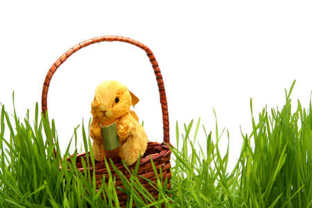 Yellow Easter bunny in the grass on the white background photo