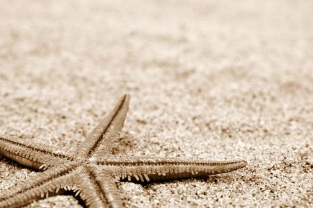 Starfish on a sand beach background. Sepia
