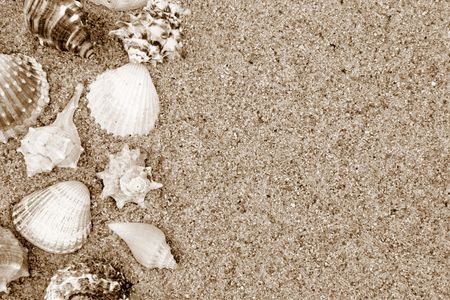 Different shells on a sand beach background. Sepia Stock Photo - 1208894