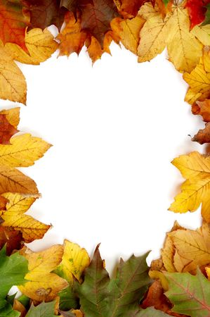 Colorful autumnal leaves on a white background photo