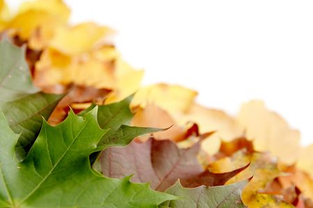 Colorful autumnal leaves on a white background Stock Photo - 2066720