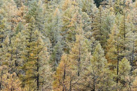 Fall trees under snow powder Stock Photo - 5930351