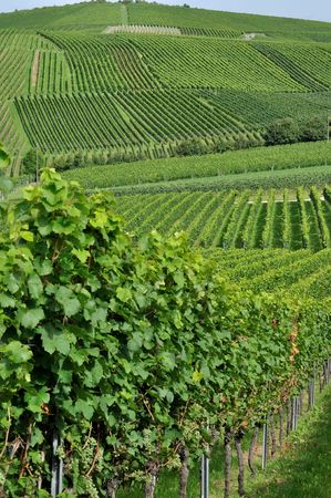 hilly vineyard #6, baden