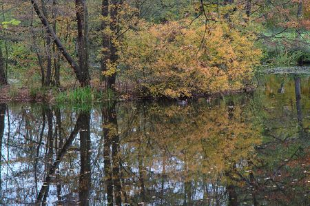 reflections in pond at shloss solitude, stuttgart