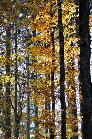 foliage in autumnal woods