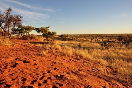 red dunes at sunset, kalahari Stock Photo