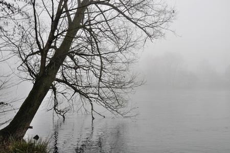 tree bowed over foggy adda river photo
