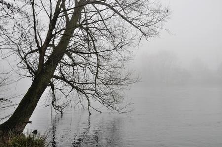 tree bowed over foggy adda river photo