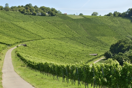 landscape of hilly vineyard with multiple lines of plants on the hills surrounding the important industrial town photo