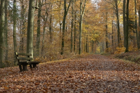 bench and walk in autumnal wood, Baden view of colorful autumnal woods in  park in surroundings of the city of Stuttgart, Stock Photo