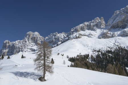 ski runs: lone tree and Rosengarten, Costalunga pass; lone tree on snowy slope in Dolomites under famous mountain range, in background ski runs, shot in bright light under deep blue sky Stock Photo