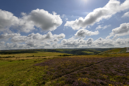 exmoor: moor landscape, Exmoor , landscape of moor with heather fields and green meadows under a bright sky Stock Photo
