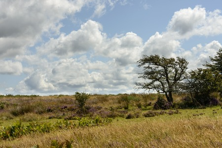 exmoor: Exmoor vegetation and bright clouds, landscape with moor vegetation, shot under bright sky with cumulus clouds