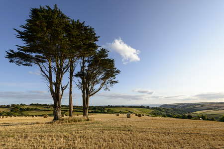 trees and stubble coast near Looe, Cornwall, trees and corn stubbles field in front of the coast near touristic village on southern coast of Cornwall