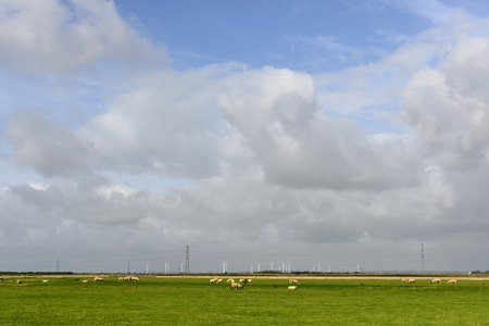 sheep and wind turbines at Romney Marsh, landscape of the marsh with a a flock of sheep in large fields, in distance wind turbines, under a bright sky,  Romney Marsh, Kent Stock Photo