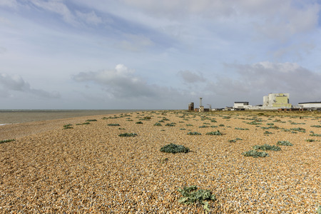marsh plant: view of the buildings of nuclear plant on the shingle beach at Dungedness,  Romney Marsh, Kent