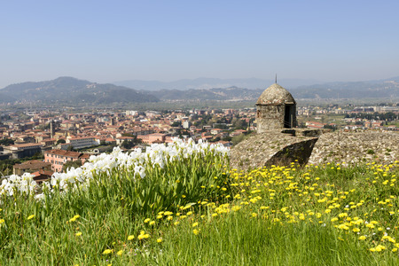 sarzana: flowers on the ramparts at Sarzanello fortress view of blossoming iris flowers over the top of the ancient ramparts at Castle shot on a sunny spring day with the hilly inland background in Sarzana Italy
