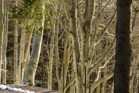 foreshortening of light between bare branches in winter wood, shot in bright winter light at Resinelli upland, Italy Stock Photo