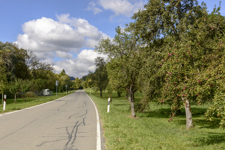 road among fruit trees in the German countryside. Shot in bright light near Achdorf, Wuttenberg Baden, Germany Stock Photo