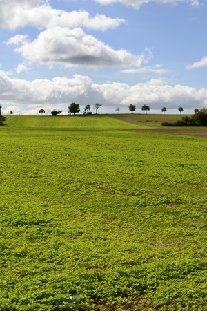 a green field under bright clouds in the German countryside. Shot in bright light near Bonndorf, Baden Wuttenberg, Germany
