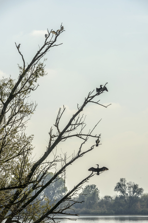Birds on branches of tree in Mincio lake Park around Town, shot in bright fall light at Mantua, Italy
