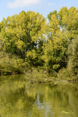 shadows of green lush vegetation on the shores of Mincio river, shot in bright autumn sunlight near Mantua, Lombardy, Italy