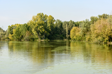 Lush green vegetation on shores of Mincio river, shot in bright autumn sunlight near Mantua, Lombardy, Italy
