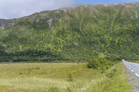 road in landscape with lush vegetation in green countryside, shot under bright summer light near lake Grunn, Andoya, Vesteralen, Norway