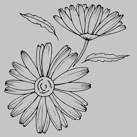 stylized chamomile flower in the graphics