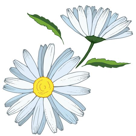 A stylized chamomile flower on a white background  イラスト・ベクター素材